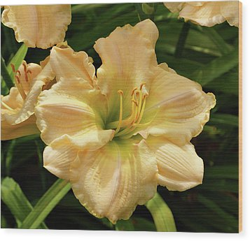 Wood Print featuring the photograph Cream Daylily by Sandy Keeton