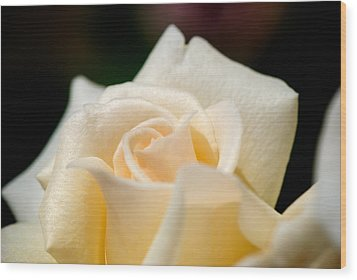Cream Rose Kisses Wood Print by Lisa Knechtel