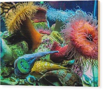 Creatures Of The Aquarium Wood Print