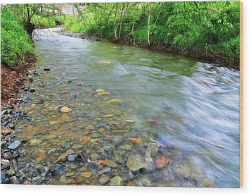 Creek Of Many Colors Wood Print by Donna Blackhall