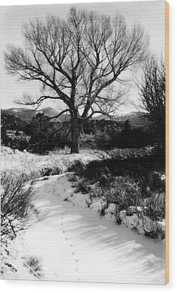 Creekside Winter Wood Print