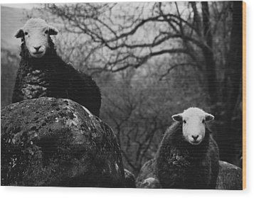 Creep Sheep Wood Print by Justin Albrecht