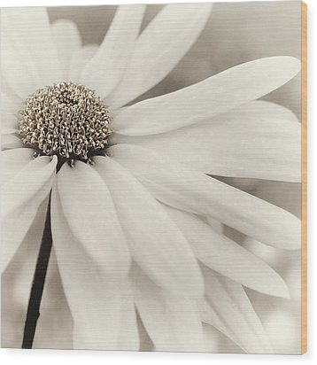 Wood Print featuring the photograph Creme Fraiche In Gold And White by Darlene Kwiatkowski