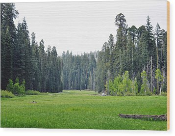 Wood Print featuring the photograph Crescent Meadow by Kyle Hanson