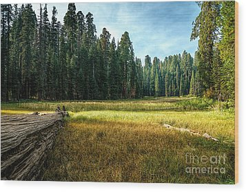 Crescent Meadows Sequoia Np Wood Print