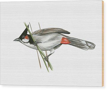 Crested Bulbul Wood Print by Lionel Portier