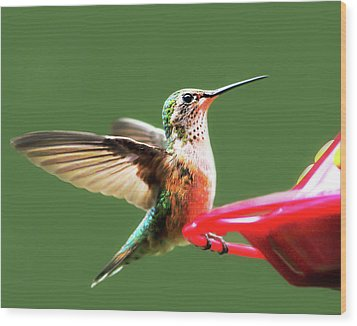 Crested Butte Hummingbird Wood Print