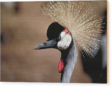 Wood Print featuring the photograph The I Can't Believe It Bird by Carl Purcell