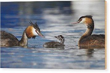 Crested Grebe, Podiceps Cristatus, Ducks Family Wood Print by Elenarts - Elena Duvernay photo