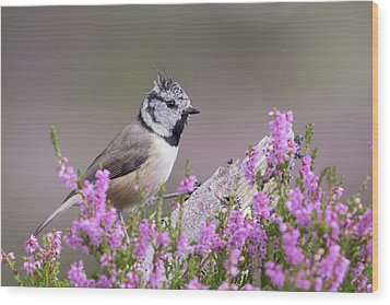 Crested Tit In Heather Wood Print