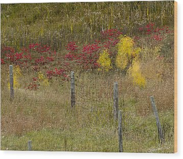 Wood Print featuring the photograph Crimson And Gold by Tara Lynn