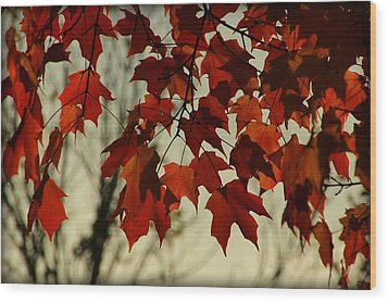 Wood Print featuring the photograph Crimson Red Autumn Leaves by Chris Berry