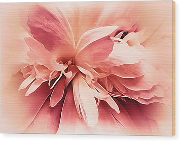 Wood Print featuring the photograph Crimson Ballet Powder Puff by Darlene Kwiatkowski