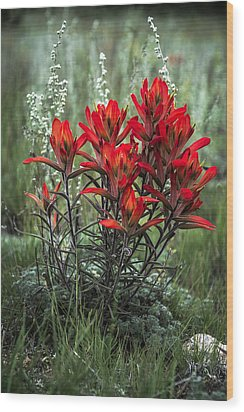 Crimson Red Indian Paintbrush Wood Print by The Forests Edge Photography - Diane Sandoval