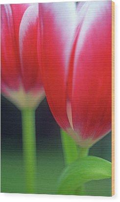 Crimson Tulips Wood Print by Kathy Yates