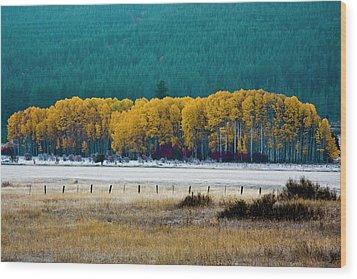 Crisp Aspen Morning Wood Print