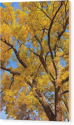 Crisp Autumn Day Wood Print by James BO  Insogna
