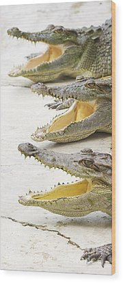 Crocodile Choir Wood Print