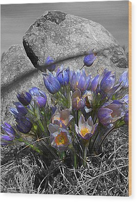 Wood Print featuring the digital art Crocus - Between A Rock And You by Stuart Turnbull