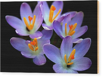 Wood Print featuring the photograph Crocus Aglow by Jessica Jenney