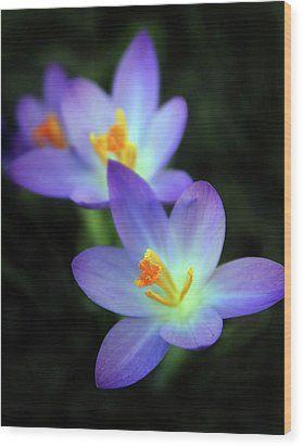 Wood Print featuring the photograph Crocus In Bloom by Jessica Jenney