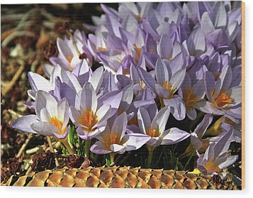 Crocuses Serenade Wood Print