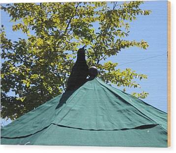 Wood Print featuring the photograph Crow On An Umbrella by AJ Brown