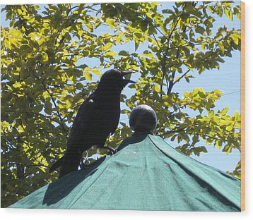 Wood Print featuring the photograph Crow On An Umbrella With Food by AJ Brown
