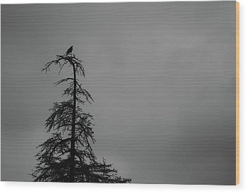 Crow Perched On Tree Top - Black And White Wood Print