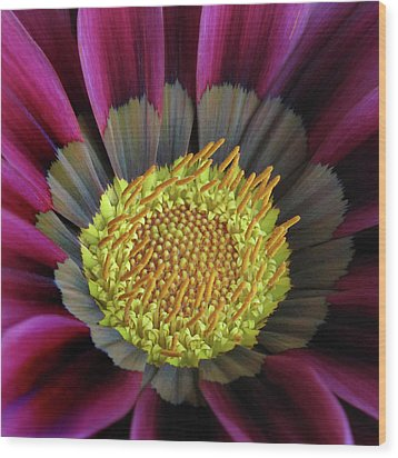 Wood Print featuring the photograph Crown Of Pollen by David and Carol Kelly