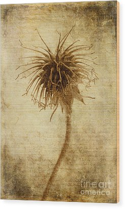 Crown Of Thorns Wood Print by John Edwards