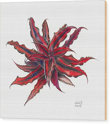 Cryptanthus Red Star Wood Print