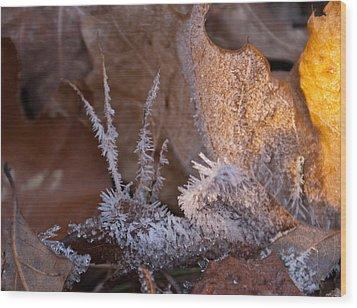 Crystaline Life Wood Print by Douglas Barnett