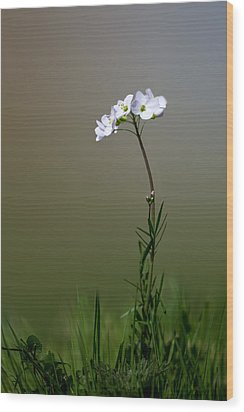 Cuckoo Flower Wood Print by Ian Hufton