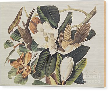 Cuckoo On Magnolia Grandiflora Wood Print by John James Audubon
