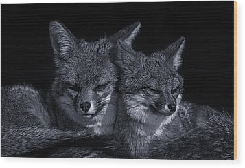 Cuddle Buddies  Wood Print by Brian Cross