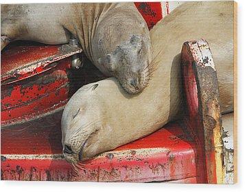 Cuddle Buddies  Wood Print