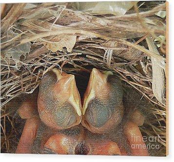 Cuddling Cardinals Wood Print by Al Powell Photography USA