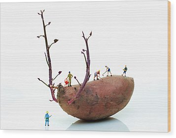 Cultivation On A Sweet Potato Wood Print by Paul Ge