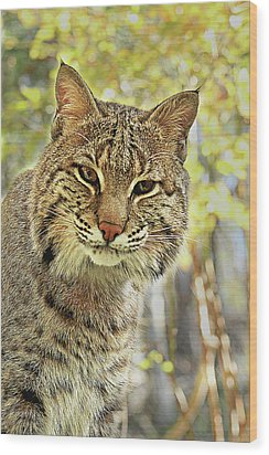 Wood Print featuring the photograph Curiosity The Bobcat by Jessica Brawley