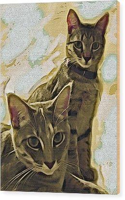 Curious Cats Wood Print by David G Paul