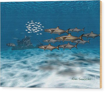 Curious Cobia Wood Print by Alex Suescun