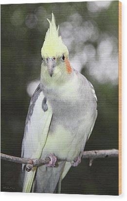 Curious Cockatiel Wood Print