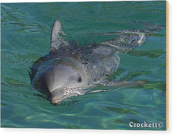 Curious Dolphin Wood Print