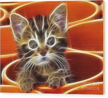 Curious Kitten Wood Print by Pamela Johnson