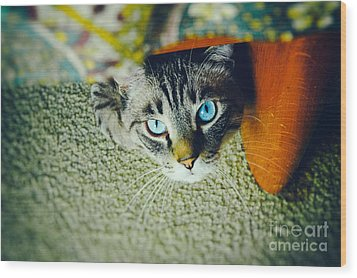 Wood Print featuring the photograph Curious Kitty by Silvia Ganora