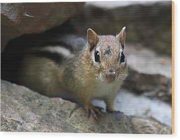 Curious Little Chipmunk Wood Print by Pierre Leclerc Photography