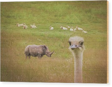 Curious Ostrich And White Rhino Wood Print