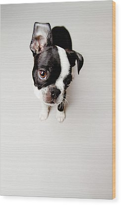 Curious Wood Print by Square Dog Photography