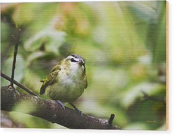 Curious Vireo Wood Print by Christina Rollo